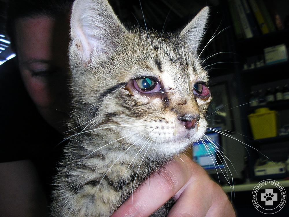 vakcina giardia macskák