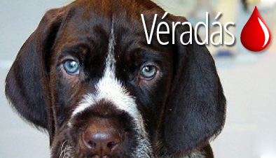 veradas_kiemeltkep