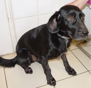 kutya allergiás viszketés okozta szőrhiány