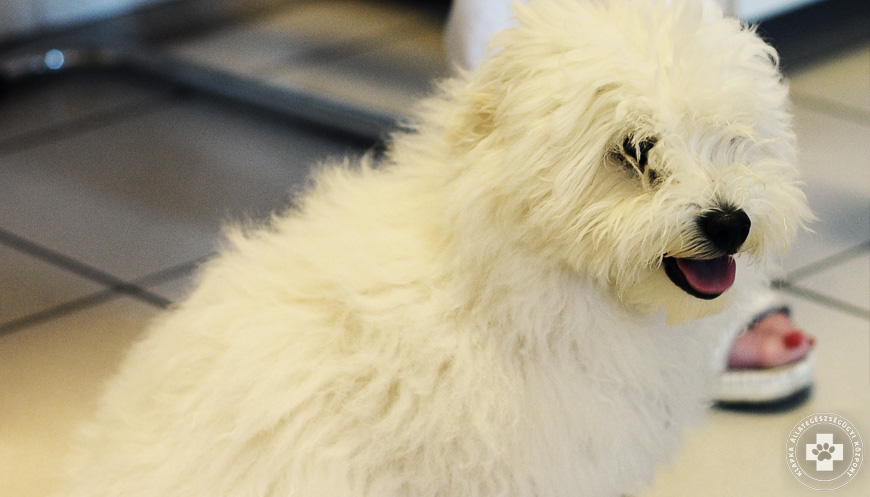 kutya-macska-epilepszia-szakvizsgalat